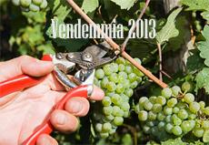 vendemmia 2013 sicilia