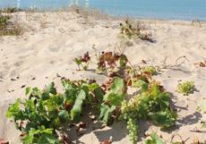 insolia sotto la sabbia