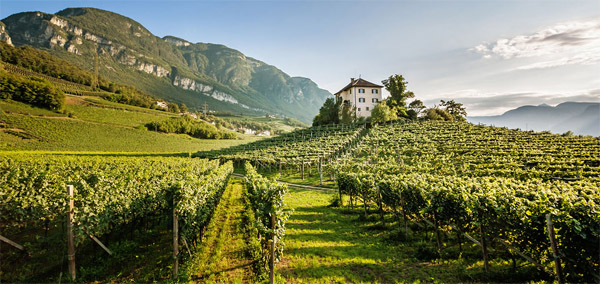 vinum hotels 2 giornalevinocibo